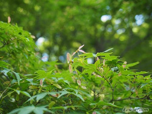 小石川植物園内