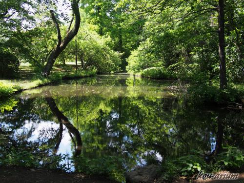 小石川植物園にある池の水面