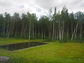 サンクトペテルブルク中心地からペテルゴフへの道のり