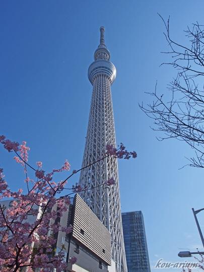 東京スカイツリーとカワヅザクラ
