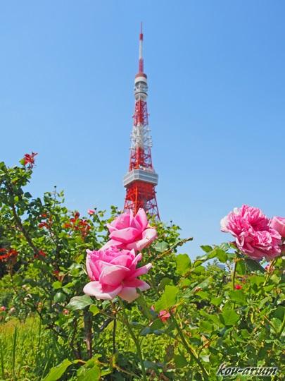 プリンス芝公園の春バラ