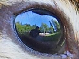 エゾシマリスの瞳