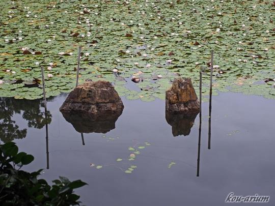 龍安寺 鏡容池の水分石