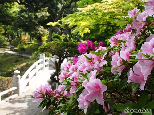 旧安田庭園のツツジ