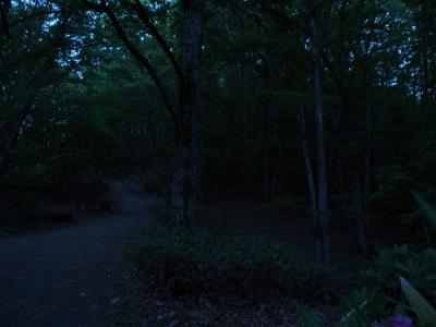 秩父ミューズパーク内の森