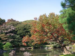 紅葉した桜と池