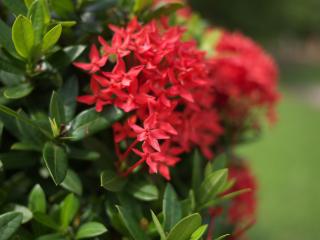 熱帯性植物