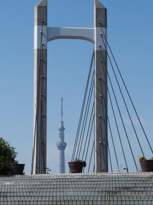 木場公園大橋から望む東京スカイツリー