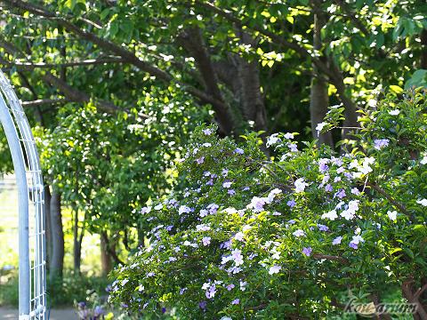 木場公園内
