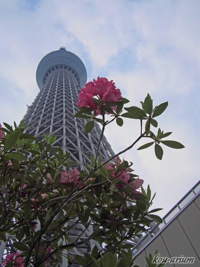 東京スカイツリーと花