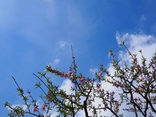 青空と葉桜