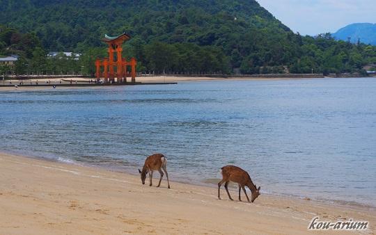 宮島の砂浜