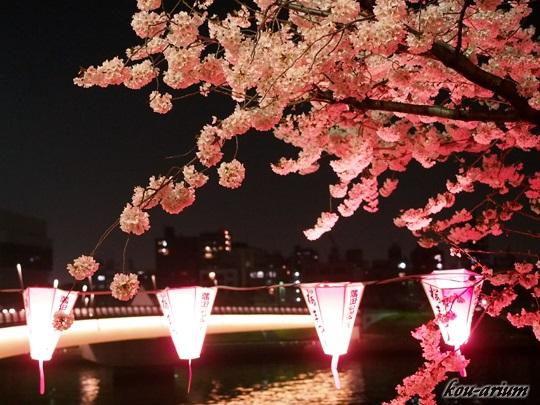 桜橋とソメイヨシノ